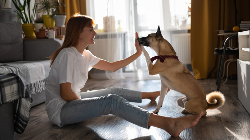 How to Train Pet at Home