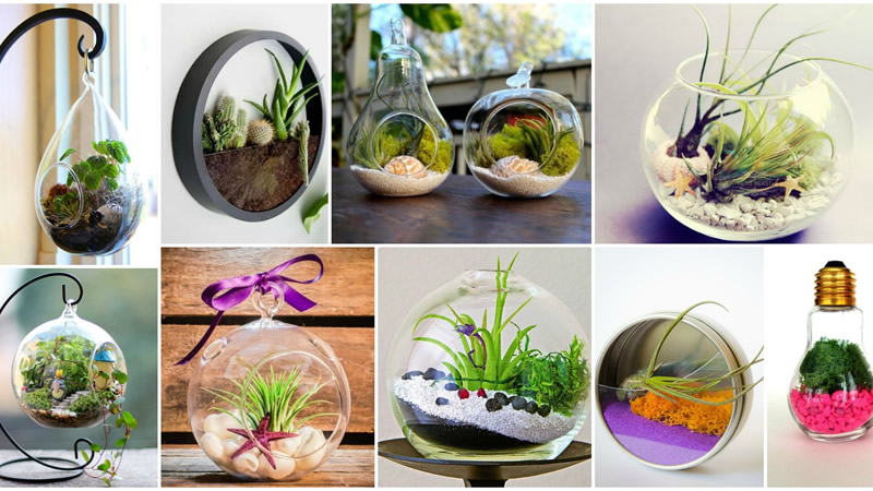 Decorative Terrariums Great Work of Art