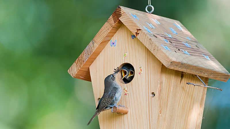 Hanging Wooden Bird House